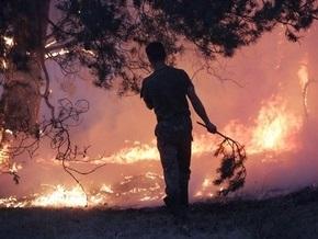 В Севастополе локализовали лесной пожар