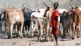 Племена в Южном Судане сражаются за рогатый скот. ООН вводит войска