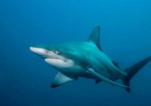 Reuters: Одним из пострадавших от нападения акулы в Египте является украинец