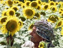 Украина остановила экспорт подсолнечного масла