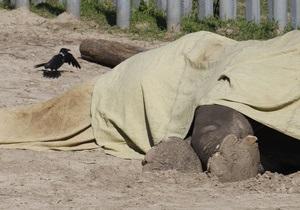 Обнародованы результаты вскрытия слона Боя