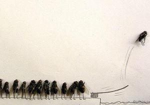 В Запорожье художник создал серию картин из мух