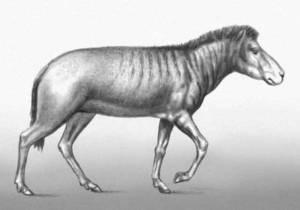 В Крыму обнаружили останки трехпалой лошади возрастом 6-7 млн лет