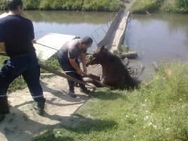 В Хмельницкой области спасатели вытащили из трясины коня