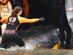В Австралии на берег выбросились киты – выжило пять животных