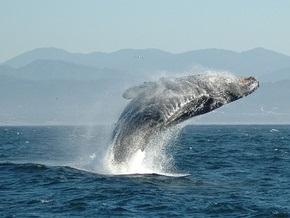 Заблудившийся у берегов Гонконга кит усложнил движение в проливе