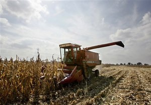 От засухи может пострадать до 50% урожая - Укргидрометцентр