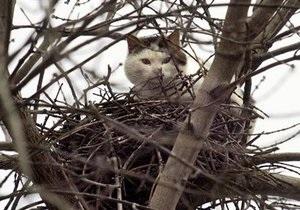 В Киеве появится служба спасения для животных