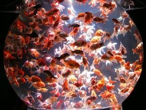 Погибли тысячи экзотических рыб, привезенные в океанариум Сочи