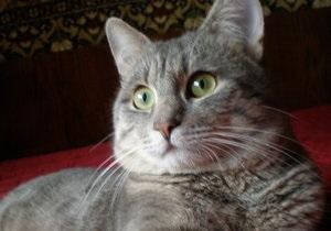 В Крыму на територии четырех сельсоветов ввели карантин из-за бешеной кошки