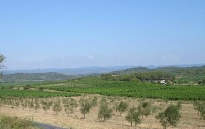 Французы взбунтовались против переезда уникальной коллекции виноградников