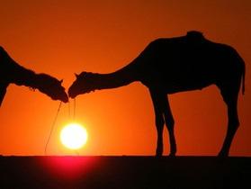 В Казахстане в ДТП с участием верблюда погибли два человека