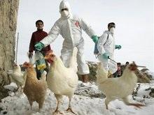 В Украине обнаружен птичий грипп