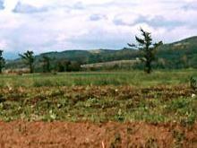 Кинах: мораторий на продажу земли будет продлен
