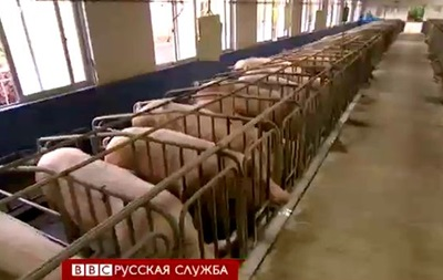 Китай поставил клонирование свиней на поток