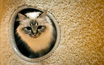 В Италии поймали пожирателя кошек: мужчина съел не менее 15 животных