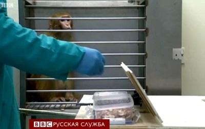 Как проводят эксперименты на животных? Видео Би-Би-Си
