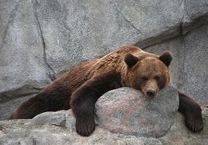 В Киевском зоопарке умер уссурийский медведь