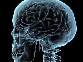 Ученые: Сложные навыки необратимо совершенствуют структуру мозга
