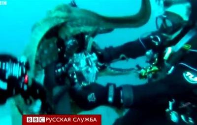 Любопытный осьминог напал на оператора