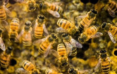 В Польше появятся гостиницы для насекомых