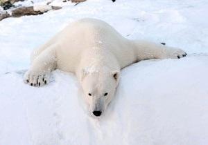 Белый медведь напал на группу людей на Шпицбергене