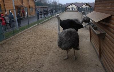 Киевский зоопарк взяли шефство над животными Межигорья