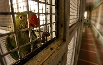 Попугай помог поймать убийцу своей хозяйки