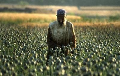 Площадь земель, занятых в Афганистане под опийный мак, увеличилась на 36%