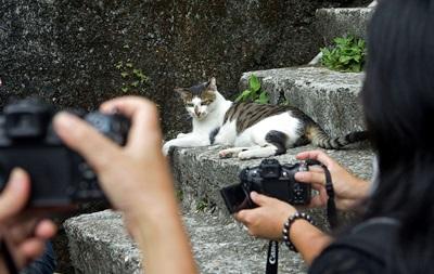 В Симферополе пройдет квест Погладь кота