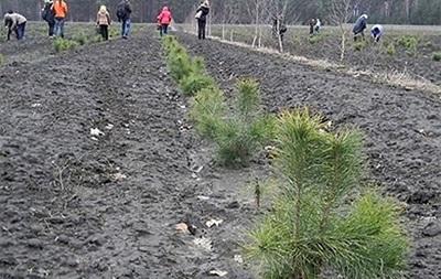 В Тернопольской области высадили лес в честь героев Майдана