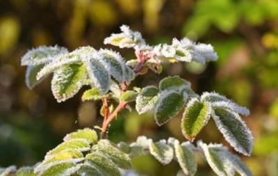 На выходных в Украине ожидаются заморозки