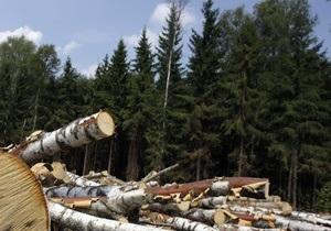 Пропавший на минувшей неделе ученый из Гарварда обнаружен в подмосковном лесу
