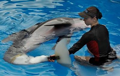 Американские боевые дельфины примут участие в учениях НАТО на Черном море – СМИ