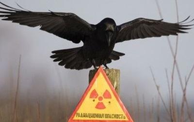 В Чернобыльской зоне построят хранилище отработанного ядерного топлива