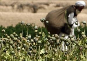 Посевы опийного мака в Афганистане поразила серьезная болезнь