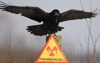Беларусь, РФ и Украина призывают выработать новую концепцию сотрудничества по Чернобылю
