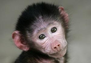 В Киевском зоопарке родился павиан-анубис