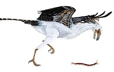 Древние птицы были похожи друг на друга - ученые