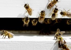 Новости США - странные новости: В США супружеская пара полгода жила в доме с десятками тысяч пчел