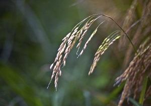 Украина вводит полный запрет на экспорт пшеницы