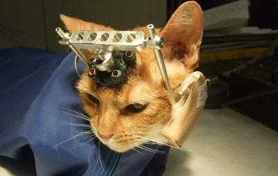 Британских ученых уличили в жестоких экспериментах над котятами