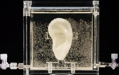 Отпечатанное на 3D-принтере  ухо Ван Гога  выставили в музее Германии