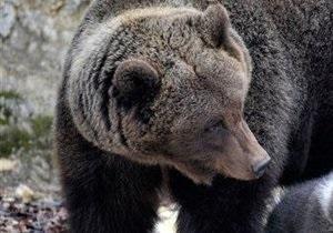 DW: В реабилитационный центр на Закарпатье привезли троих медведей