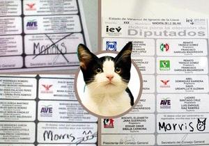 Новости Мексики - странные новости: На региональных выборах в Мексике кот набрал 600 голосов