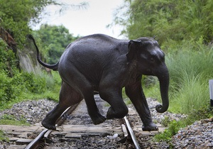 Директор николаевского зоопарка: Слона в киевский зверинец можно привезти из Мьянмы