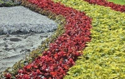 В Киеве ко Дню Независимости откроют выставку цветов Единая Украина