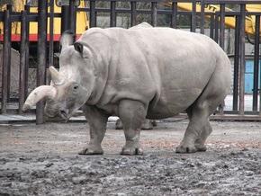Экологи Малайзии заинтересовались личной жизнью носорогов