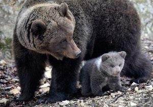 Киевский зоопарк отпразднует День медведя