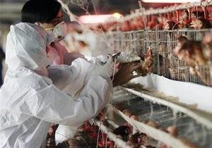 В Гонконге впервые за семь лет зафиксирован случай заболевания птичьим гриппом